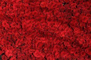 Fiori San Valentino Varese