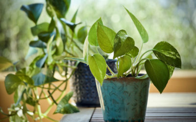 Piante per mantenere l'aria pulita: quali sono le più efficaci?